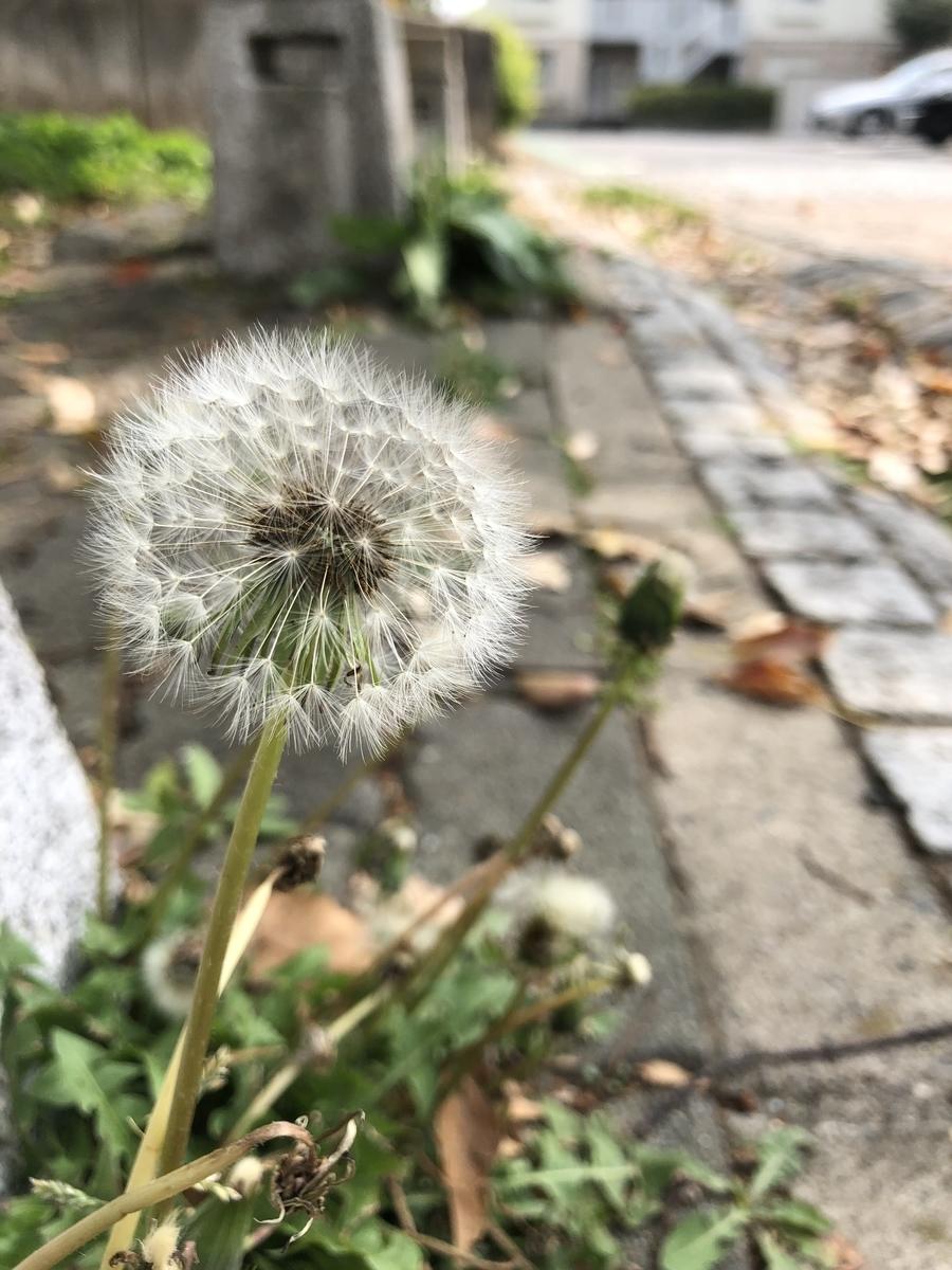 f:id:tatsunori-matsuda:20190428231219j:plain