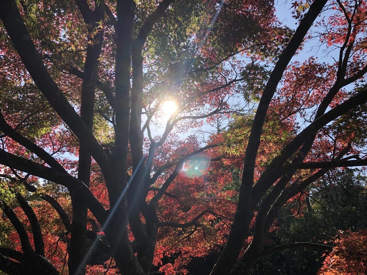 f:id:tatsunori-matsuda:20201121224333j:plain