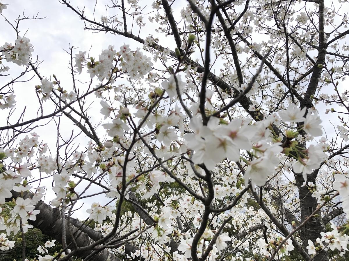 f:id:tatsunori-matsuda:20210323200840j:plain