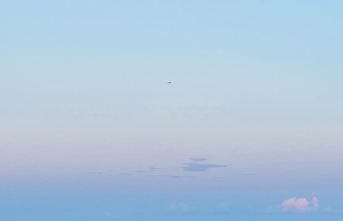 f:id:tatsunori-matsuda:20210724194900j:plain