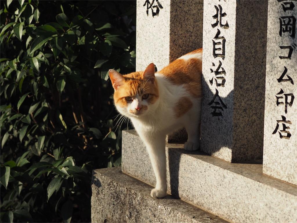 f:id:tatsuya1977:20170127213103j:image
