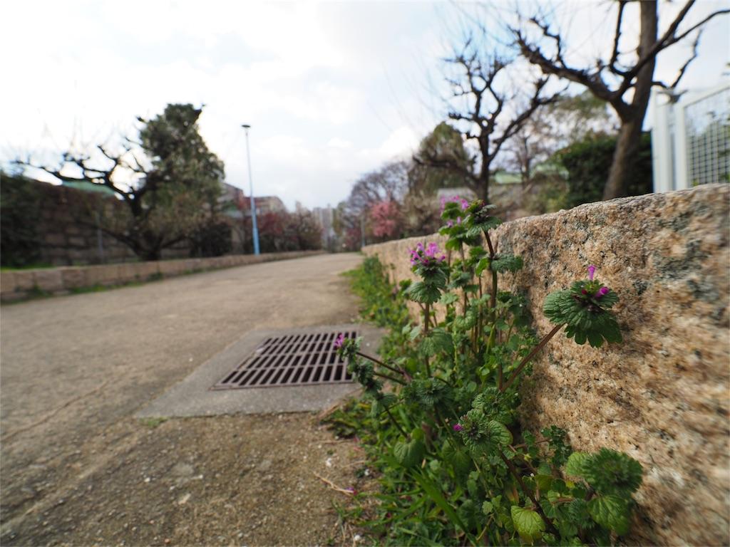 f:id:tatsuya1977:20170309094811j:image