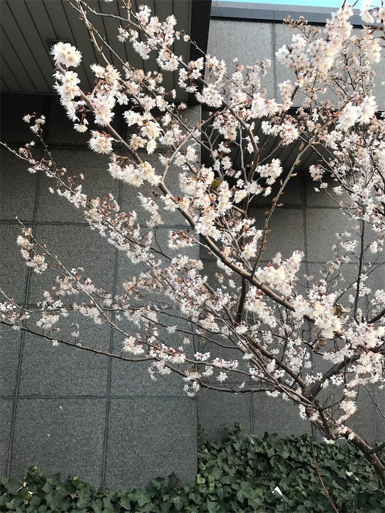 f:id:tatsuya1977:20170316122023j:image