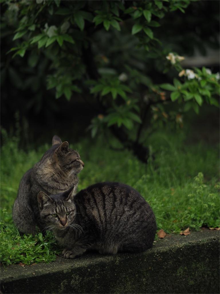 f:id:tatsuya1977:20170426203217j:image