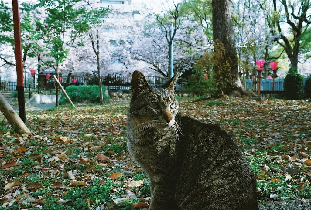 f:id:tatsuya1977:20170430212909j:image