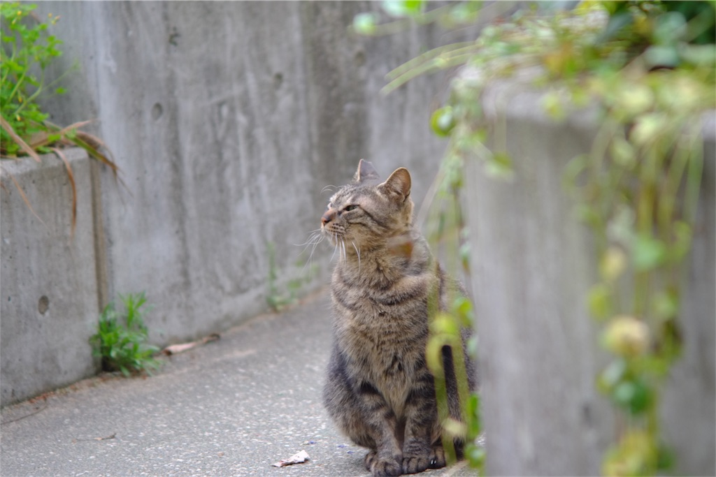 f:id:tatsuya1977:20170503085102j:image