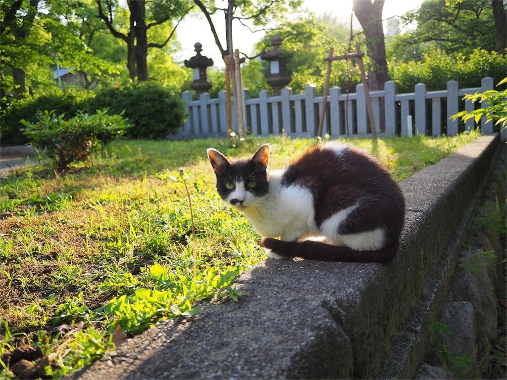 f:id:tatsuya1977:20170516122939j:image