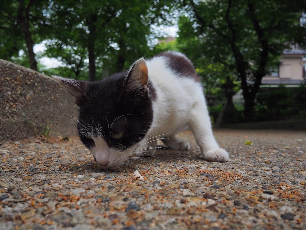 f:id:tatsuya1977:20170516195932j:image