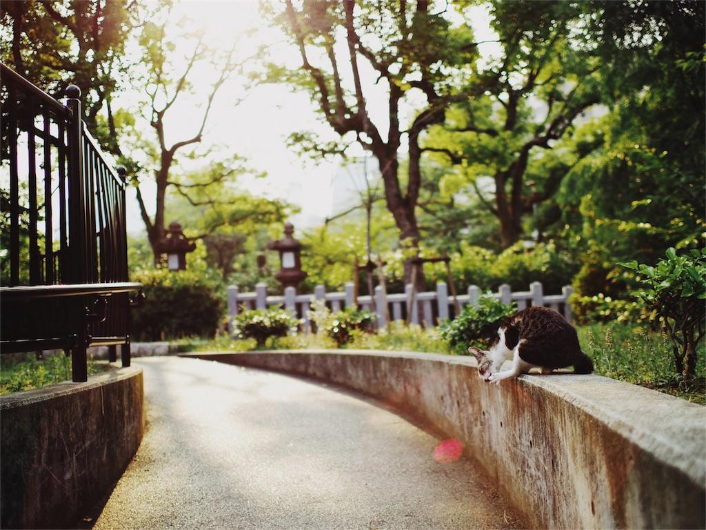 f:id:tatsuya1977:20170601095136j:image