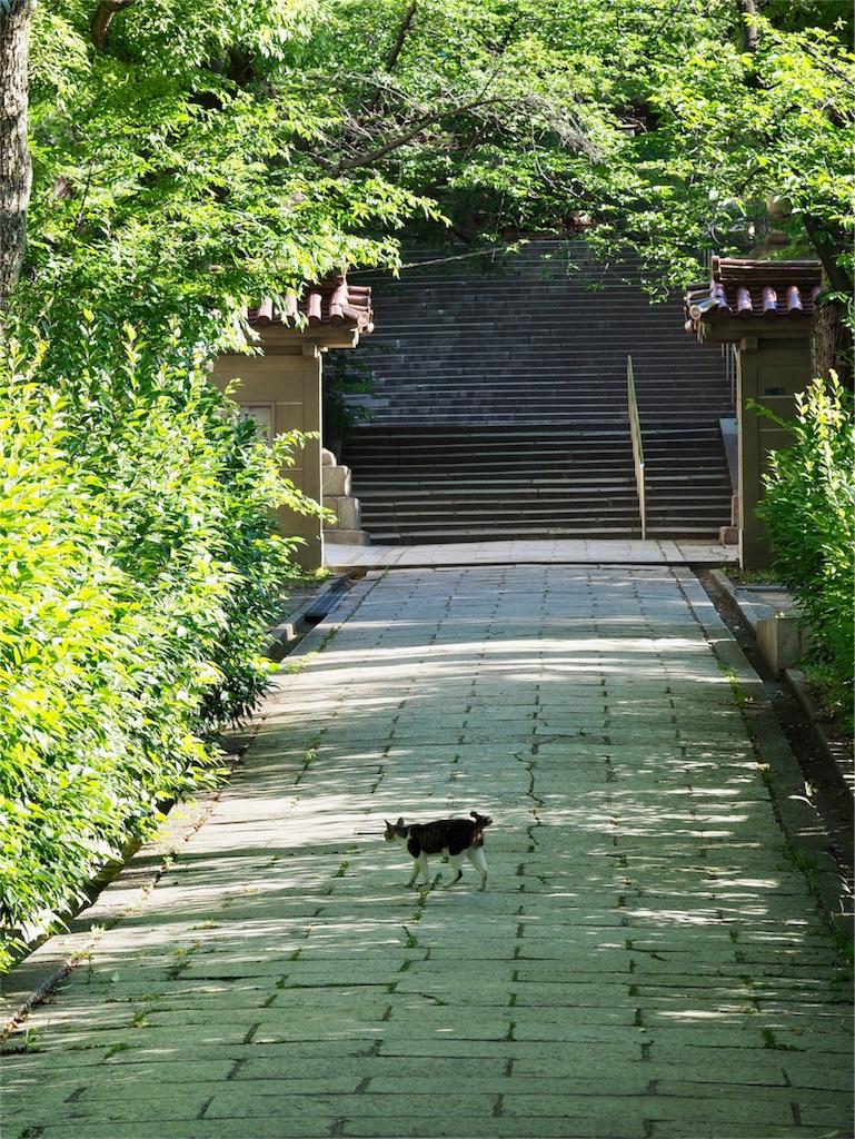 f:id:tatsuya1977:20170606092145j:image