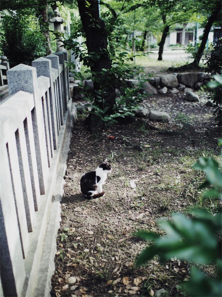 f:id:tatsuya1977:20170626214500j:image