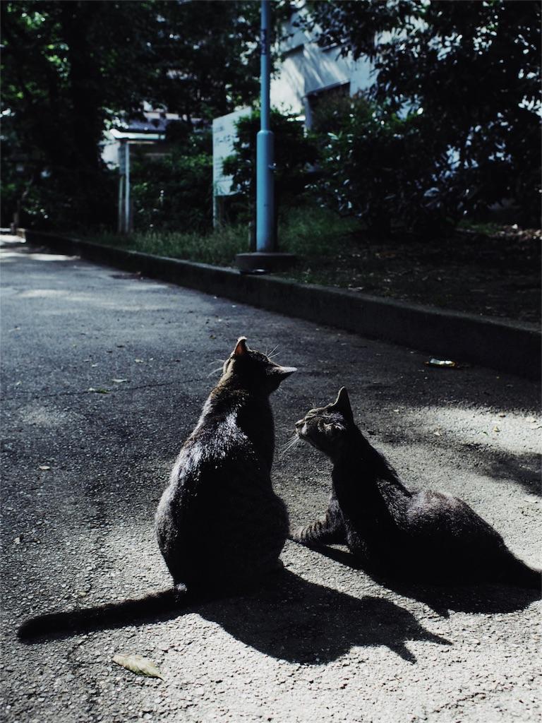 f:id:tatsuya1977:20170626214811j:image