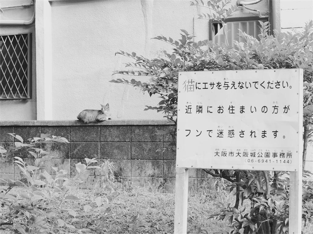 f:id:tatsuya1977:20170628203059j:image