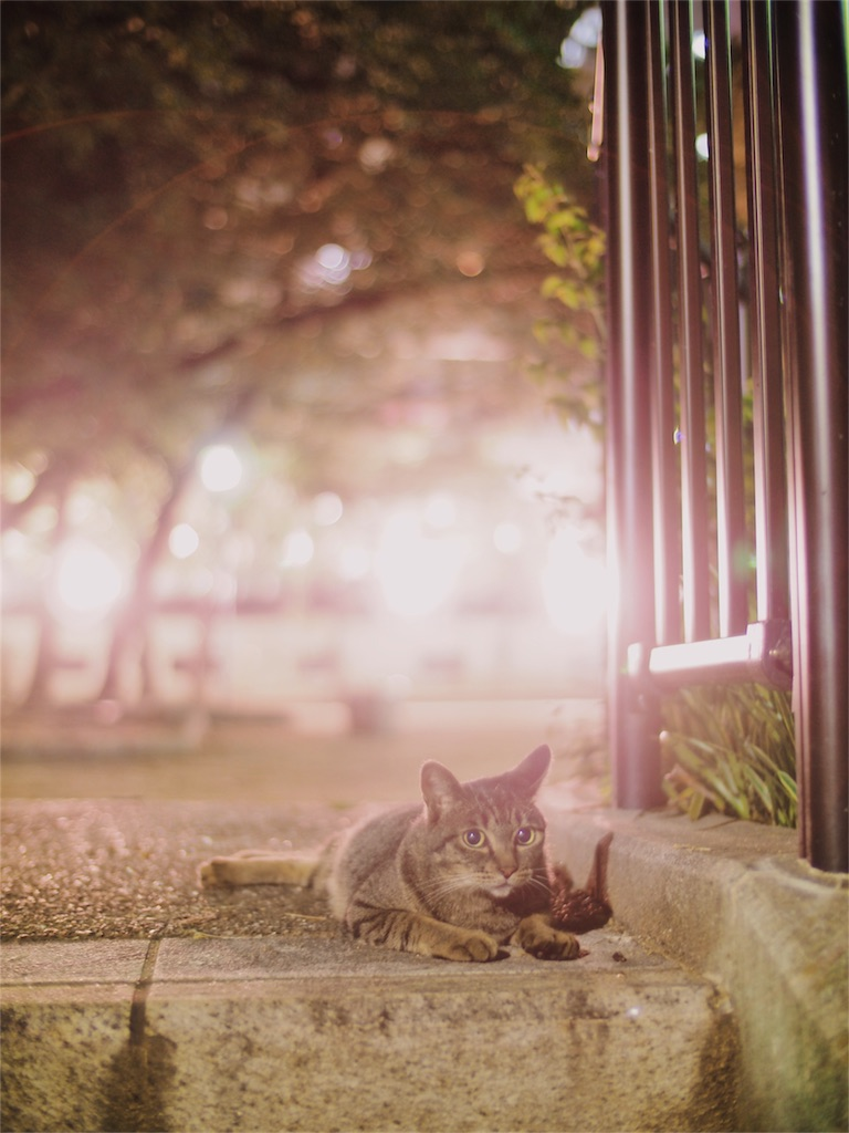 f:id:tatsuya1977:20170714081322j:image