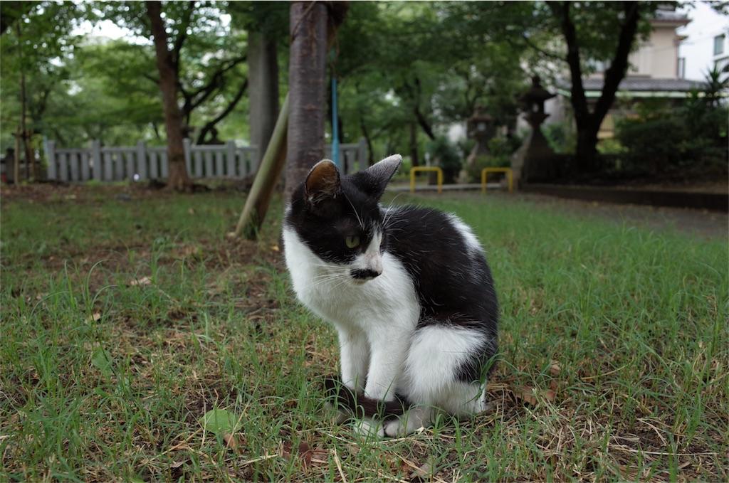 f:id:tatsuya1977:20170808103526j:image