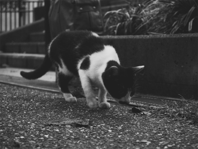f:id:tatsuya1977:20170907225948j:image