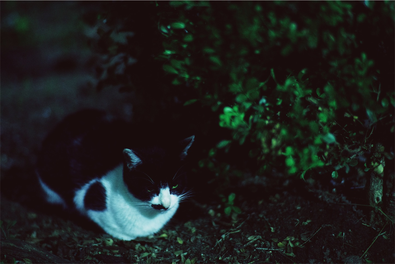 f:id:tatsuya1977:20171010102617j:image