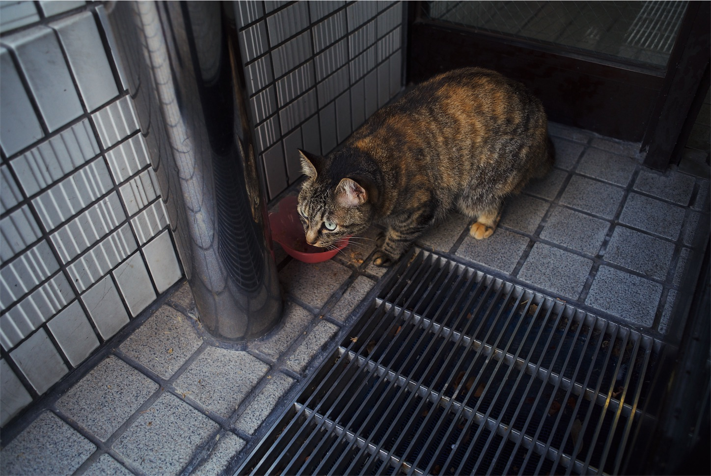 f:id:tatsuya1977:20171011094854j:image