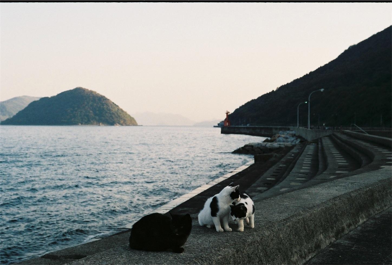 f:id:tatsuya1977:20171205185236j:image