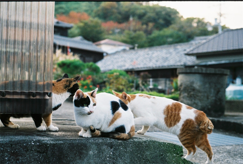 f:id:tatsuya1977:20171205191010j:image