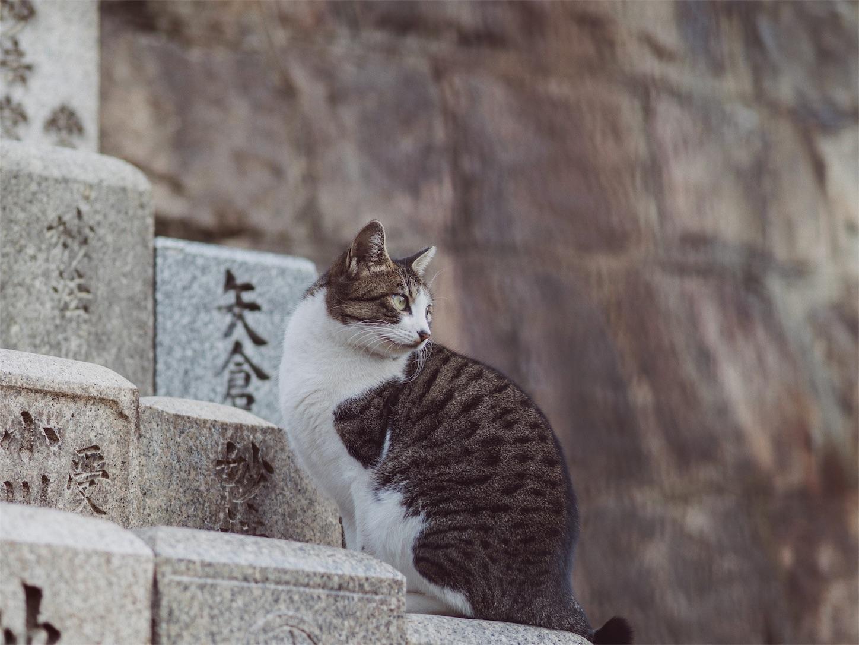 f:id:tatsuya1977:20171207220836j:image