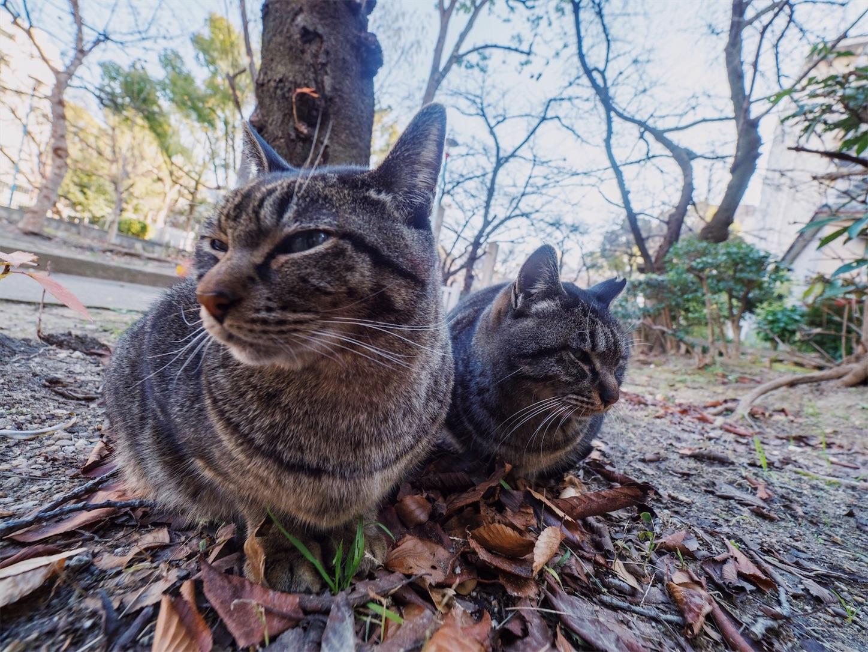 f:id:tatsuya1977:20171218221601j:image