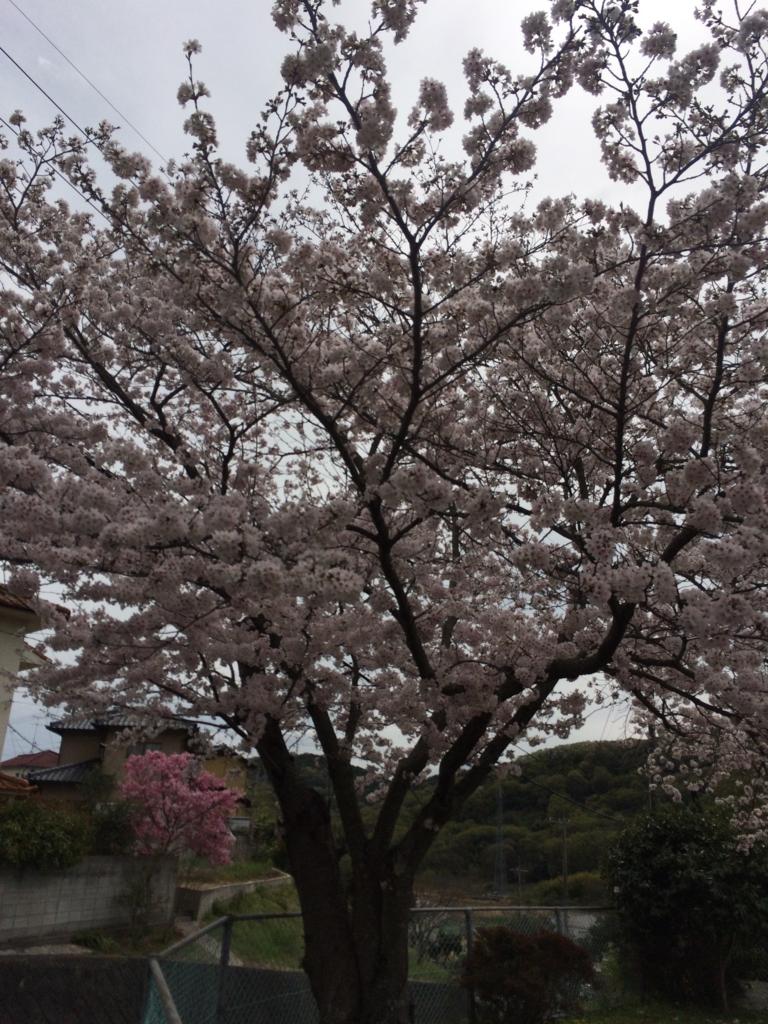 f:id:tatsuyakawakami:20160405223102j:plain
