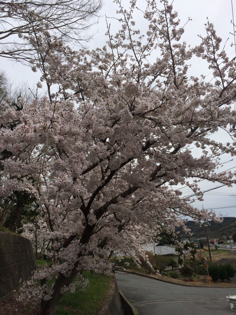 f:id:tatsuyakawakami:20160405223134j:plain