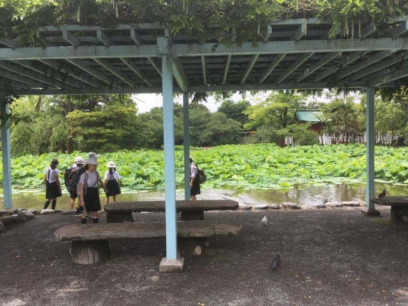 f:id:tatsuyakawakami:20180616110010j:plain