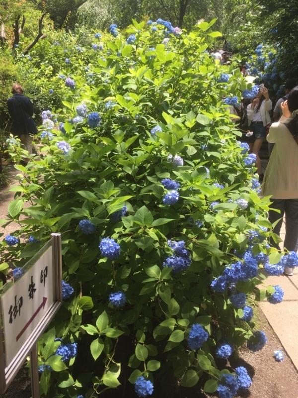 f:id:tatsuyakawakami:20180616133034j:plain