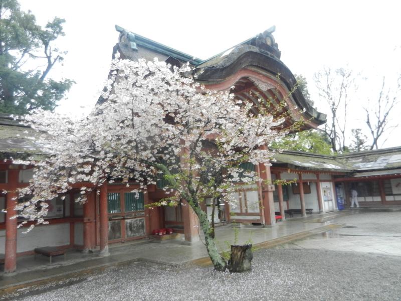 f:id:tatsuyakawakami:20190418121730j:plain