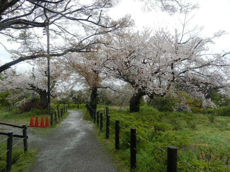 f:id:tatsuyakawakami:20190418121928j:plain