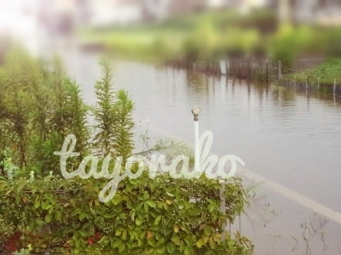 f:id:tayorako:20190126212455j:image
