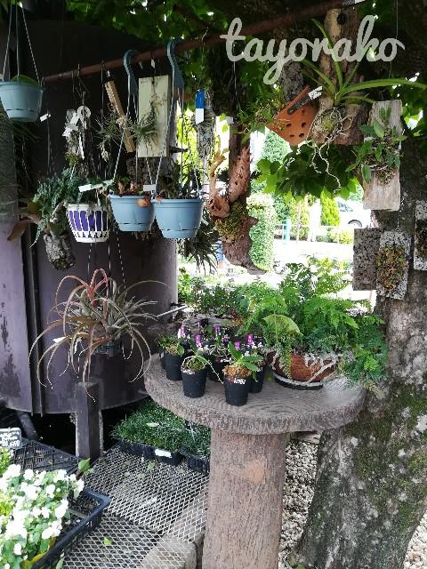 f:id:tayorako:20190601193126j:image