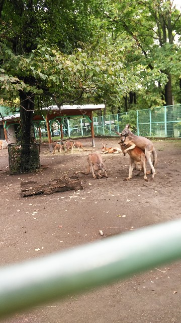 f:id:tayumana-family:20180923220856j:image