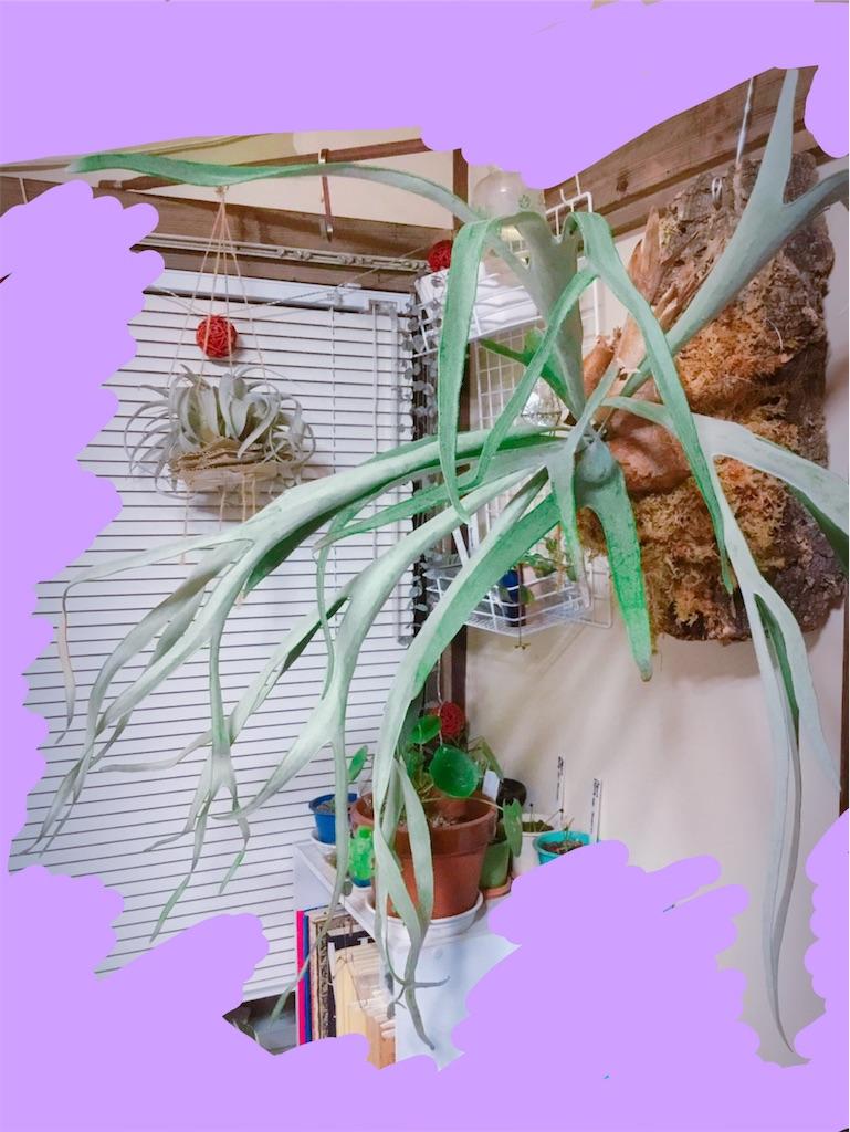 f:id:teamgreen:20181202235127j:image