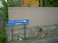 [残され犬と塀の上の猫]
