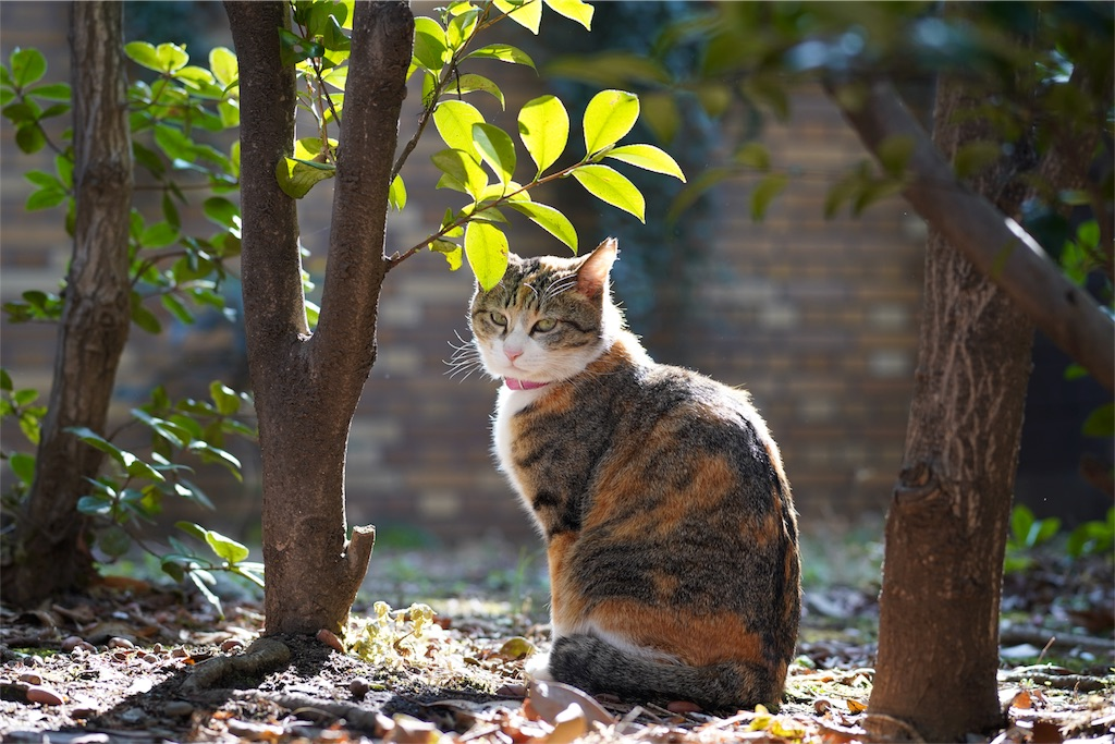 池袋中央公園_野良猫
