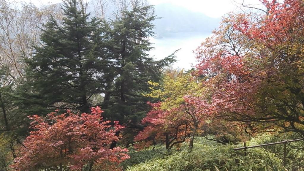 下山中の紅葉