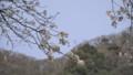 桜の枝の先、可愛い