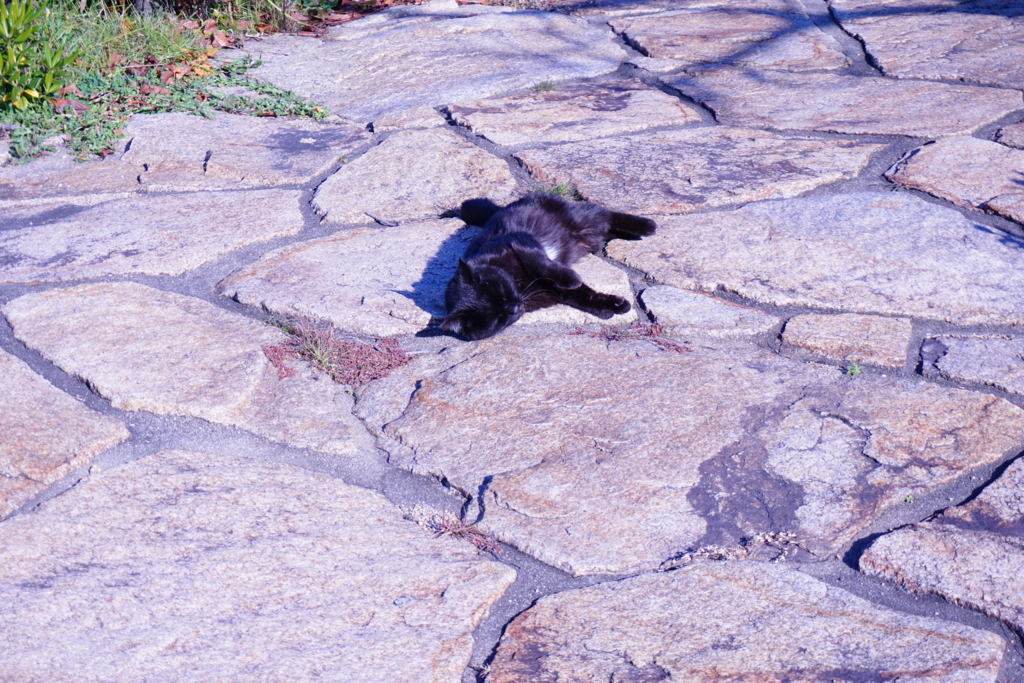 下津井の猫