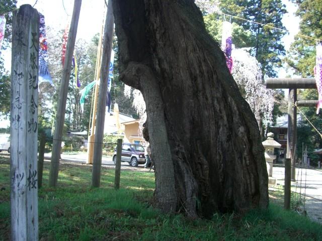 f:id:temi-p:20090409141524j:image
