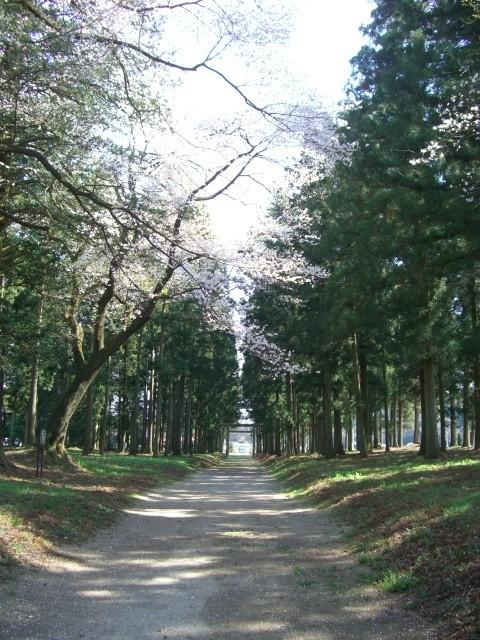 f:id:temi-p:20090409141716j:image