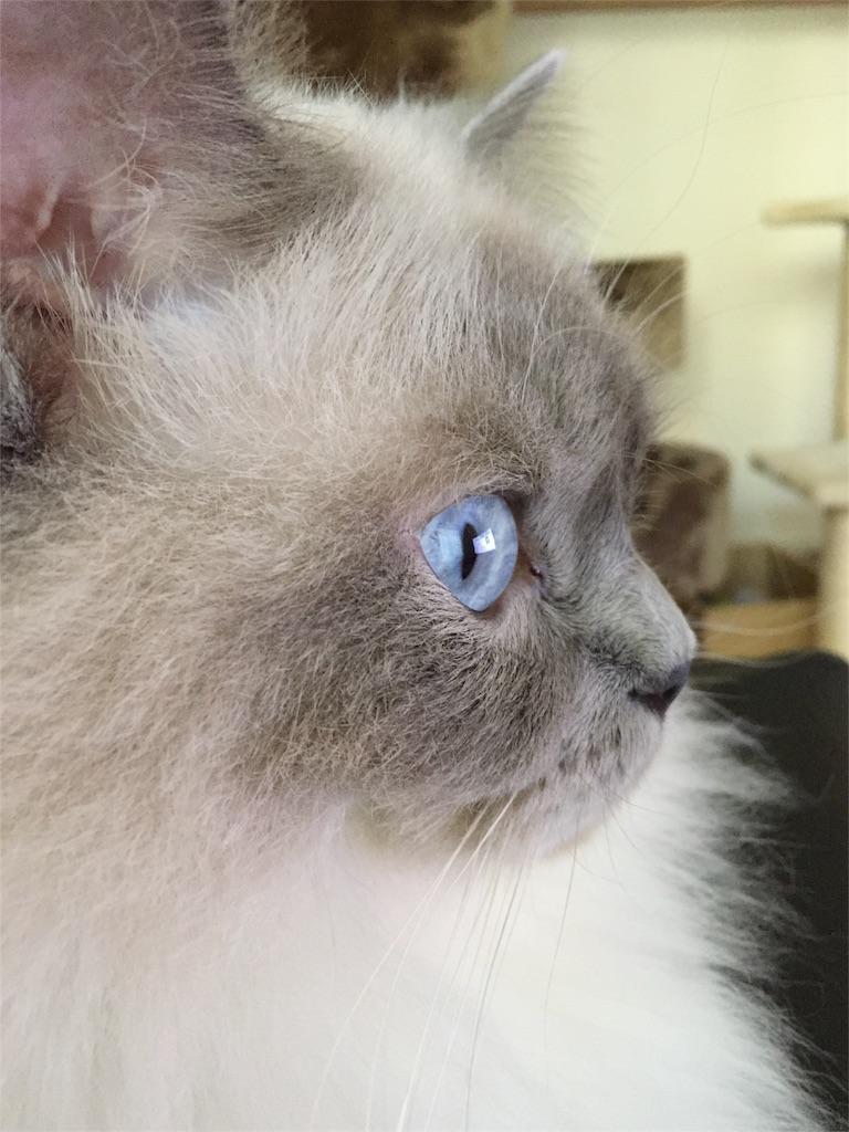 f:id:templecat:20160830123759j:image