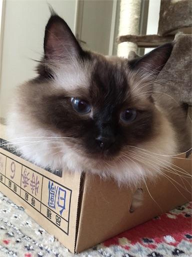 f:id:templecat:20160910195117j:image