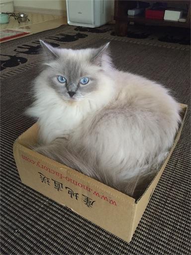 f:id:templecat:20160910210041j:image