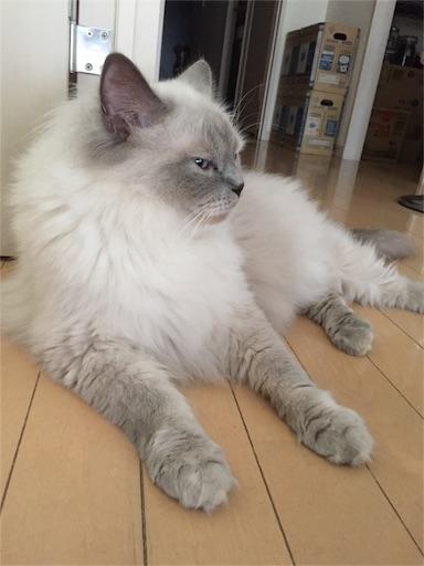 f:id:templecat:20160911075258j:image