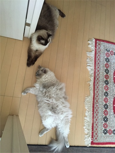 f:id:templecat:20160912063206j:image