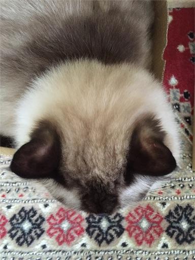 f:id:templecat:20160930171718j:image