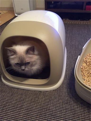 f:id:templecat:20161023211345j:image